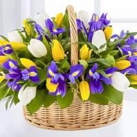 Разноцветные тюльпаны и ирисы в корзине R003